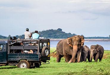 Jeep Safari Minneriya