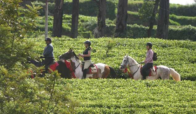 Horse Riding in Sri Lanka