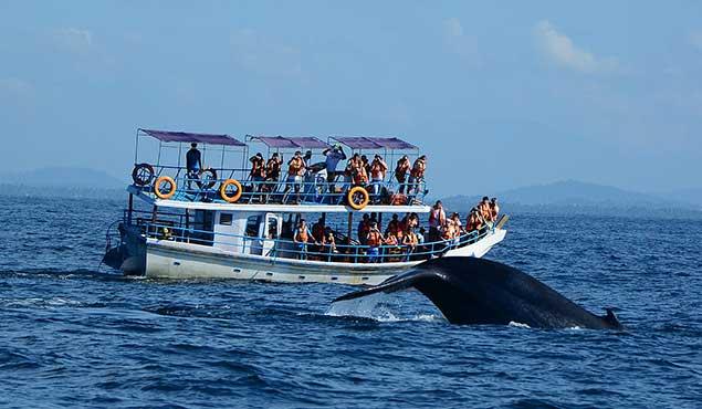 Whales Watching in Sri Lanka